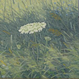 Thomas Sarrantonio  Study (Queen Anne's Lace)