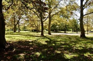 Cadwalader trees